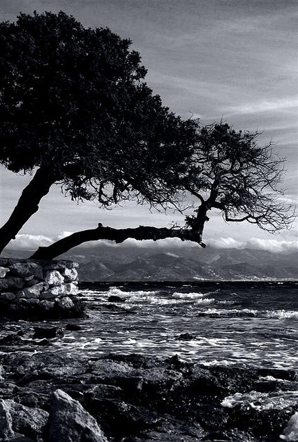 Nature Gone Wild  Santa Maria Beach Paros