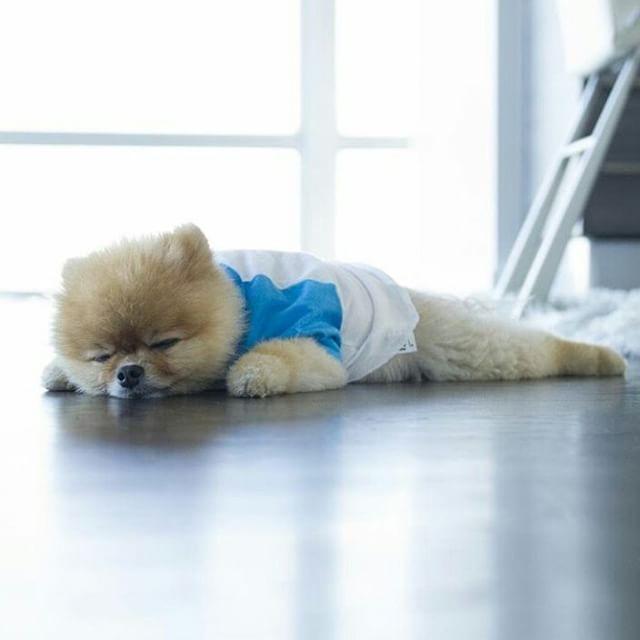 Best Food For Pomeranian Dogs Uk