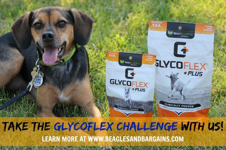 Get Active Again with Glyco Flex Plus + GIVEAWAY! | http://www.beaglesandbargains.com/active-glyco-flex-plus-dog/