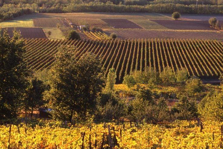vineyards in Oltrepò