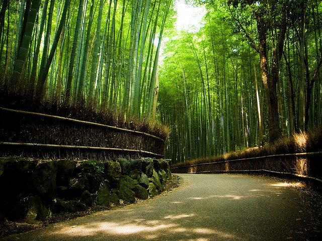 the path of bamboo, revisited #3 (near Nonomiya shrine, Kyoto)