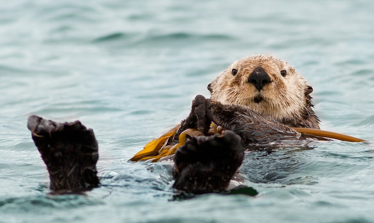 HAPPY TO BE HERE by Debra Brash  >>read about the sea otter...such an amazing little guy!