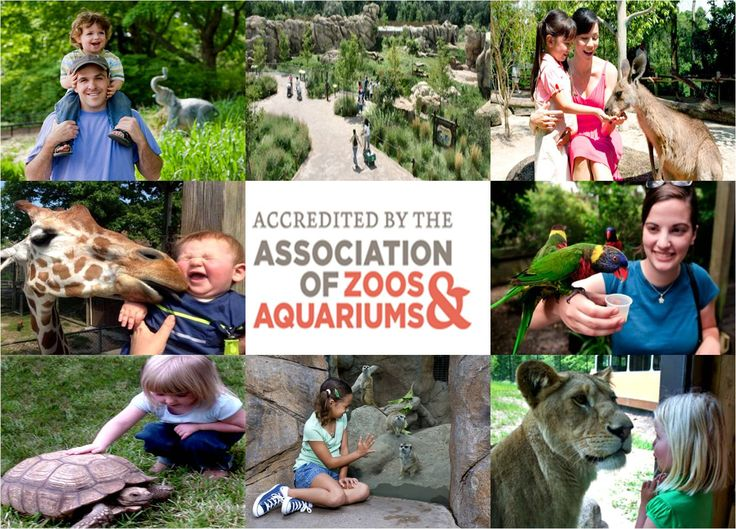 Listing of All the Accredited Zoos in America ... * Parent's Magazine = 10 Best Zoos for Kids http://www.parents.com/fun/vacation/ideas/kid-friendly-zoos/  * Traveler's Hub = 10 Best Zoos for Kids http://travelerhubs.hubpages.com/hub/Top-Top-10-Zoos-in-USA-for-Kids---Part-I  * America's Best = 10 Best Zoos http://www.americasbestonline.net/zoos.htm  * She Knows = 8 Best Zoos for Kids http://www.sheknows.com/living/articles/996613/top-8-zoos-for-kids