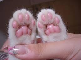 Картинки по запросу кошачьи лапки трафарет