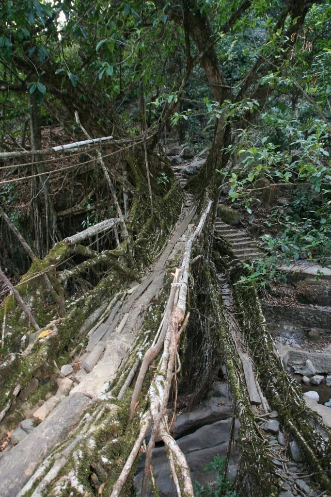Pic of the Week: Living Root Bridge, Nongriat, India: Photos, Roots Bridges, Roots Trunks, India भ रत, Incr Living, India भारत, Natural Living, Living Roots