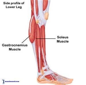 Gastrocnemius Muscle Pain - Bing images