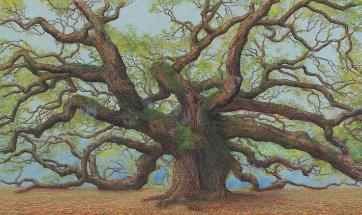 Charles Brindley: The Great Angel Oak, oil on canvas, 2011