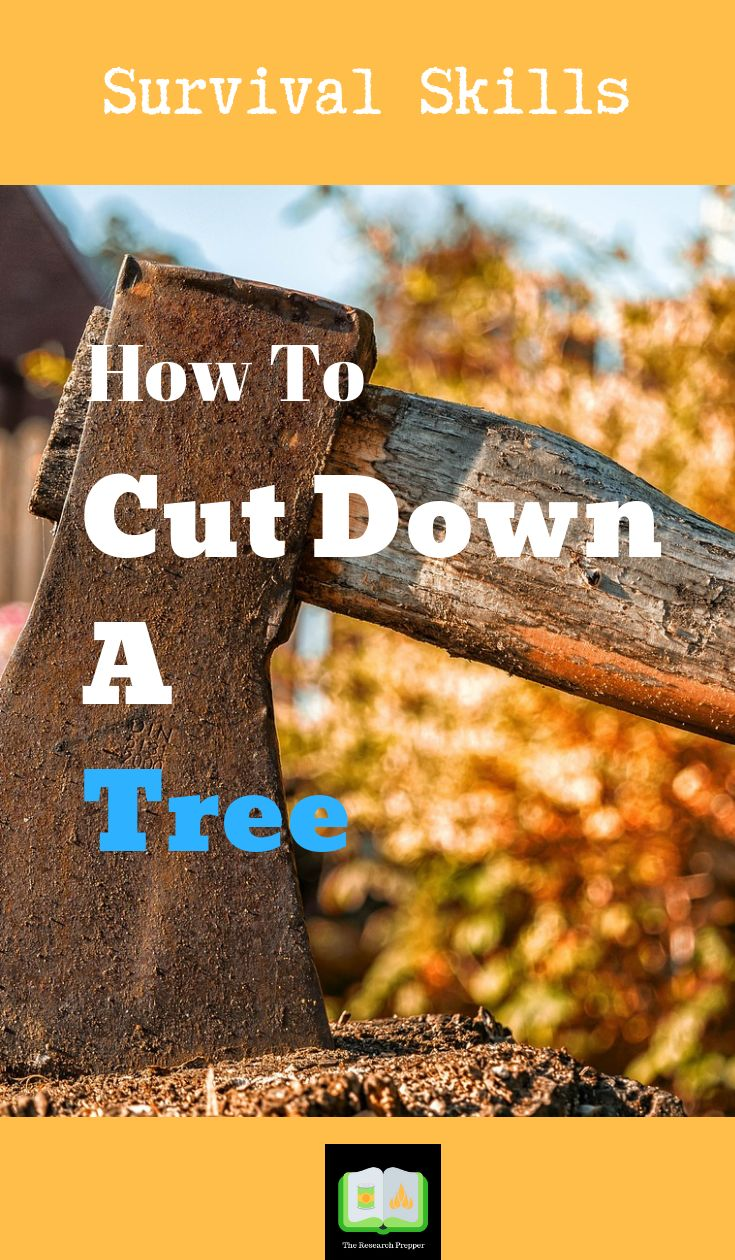 Survival Skills- How To Cut Down A Tree
