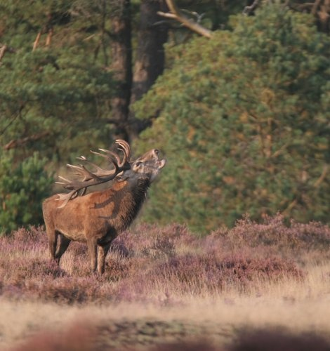 Fall at Nationaal Park Hoge Veluwe