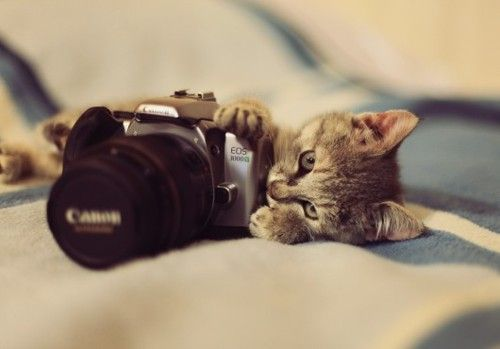 Canon, Cute Animal, Cat, Inspiration Photography, Inspiration Pictures, Photography Design, Kittens, Kitty, Cameras