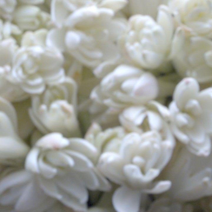 11.3 тыс. отметок «Нравится», 45 комментариев — Ralph Lauren (@ralphlauren) в Instagram: «Modern femininity, captured in the essence of tuberose, defines the new fragrance, Woman by Ralph…»