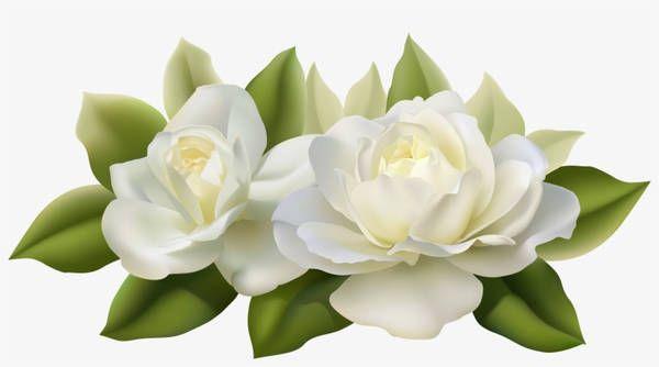 Gardenia Flower Color Palette Estampas Florais Adesivos De Unhas Desenhos Pra Unhas