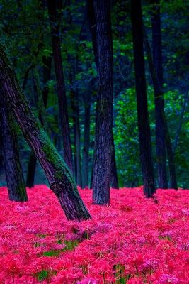 I pinned this picture of what appears as a very bright forest. The forest has hot colors, and I think that would incorporate and blend really well with the creature(s) I plan on creating, therefore I pinned this item.