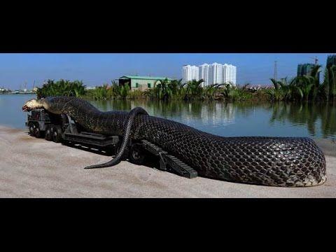 ANAKONDA OLBRZYMIA: W poszukiwaniu największego węża świata FILM DOKUMENTALNY LEKTOR PL - YouTube