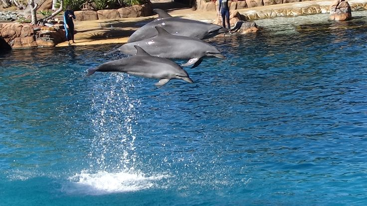 Seaworld, on the Gold Coast