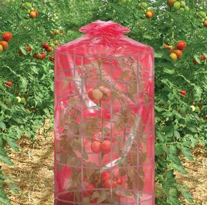 Be prepared for next spring's tomato planting. The Better Reds Greenhouse may very well be the best tomato-growing miracle yet. Plant earlier and harvest later—grow tomatoes in the south year round!