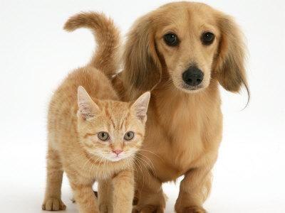 #Gattino# #rosso# con il suo #amico# cagnolino