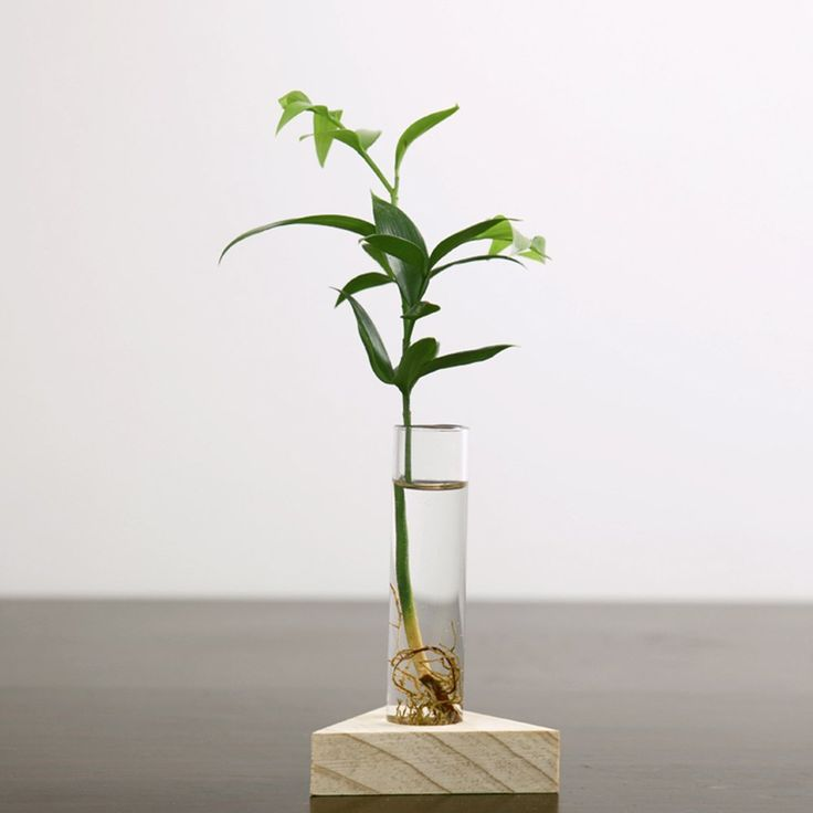 192 best air plants and terrariums images on pinterest for Test tube flower vase rack