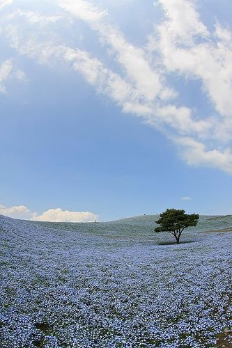 Japan, Hitachi, Seaside Park