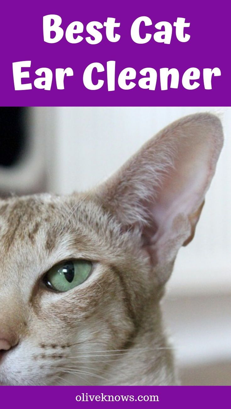 Best Cat Ear Cleaner Updated For 2019 Cats Cool Cats Cat Fleas