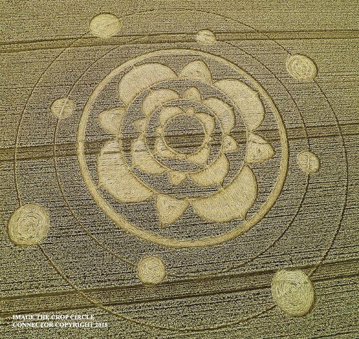 Círculo da colheita no Furzefield Shaw, Nr Merstham, Surrey, Reino Unido. Relatado 29 de julho de 2015