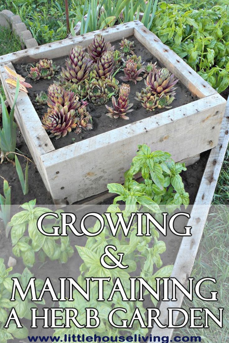 gardening tips a collection of ideas to try about other gardens