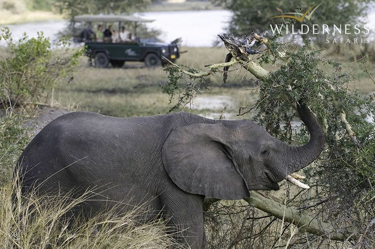 Named after Chief Liwonde who had championed its protection, the Liwonde National Park harbours ver diverse landscapes. Travel through these in search of equally diverse wildlife. #Malawi #Africa #safari
