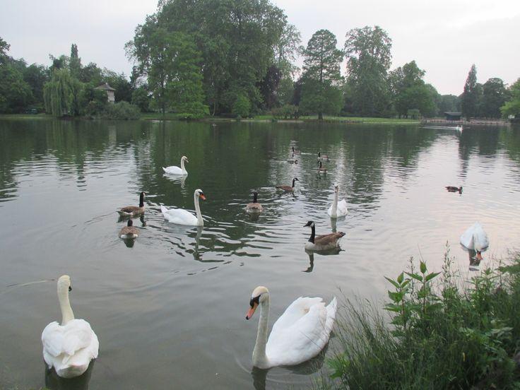 Lac Daumesnil * Birds