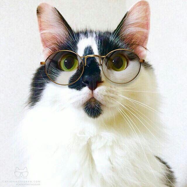 Catty Potter
