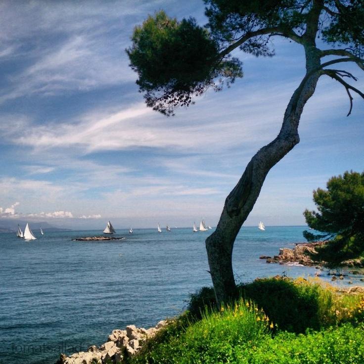 HYR UT DIN EGEN SEMESTERBOSTAD: Det gör jag. Detta är Côte d'Azur, den blå kusten. Klippor, tallar och i fjärran segelbåtar. Där finns min lägenhet. Läs mer o att hyra ut semesterbostaden här http://tips-om.se/jobba-med-manniskor/hyra-ut-bostad