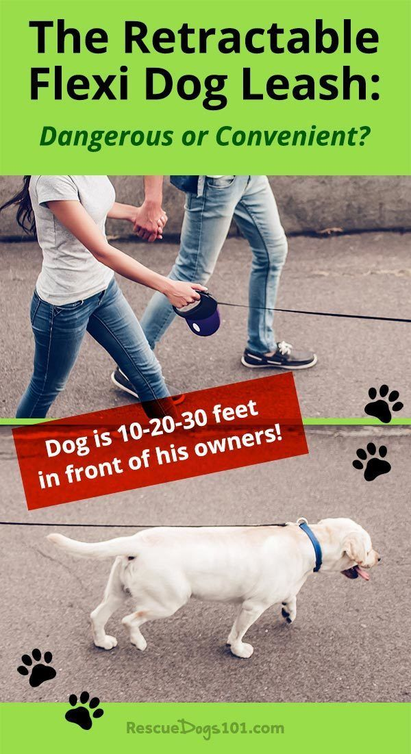 The Flexi Retractable Dog Leash Dog Training Dog Training Tips