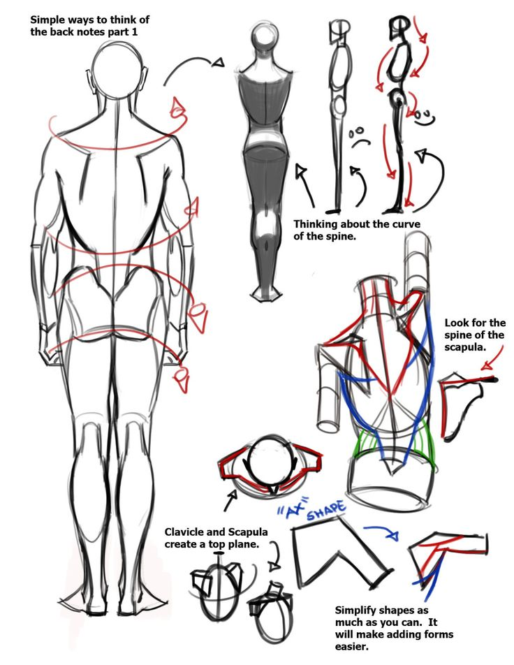 124 best human body anatomy for drawing images on Pinterest ...