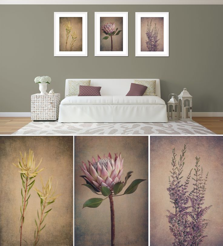 """Protea & Fynbos"" print set - 3x 50x75cm prints, white frame. Fine Art Photography as home decor."