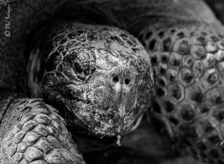 Gros plan d'une tortue de terre