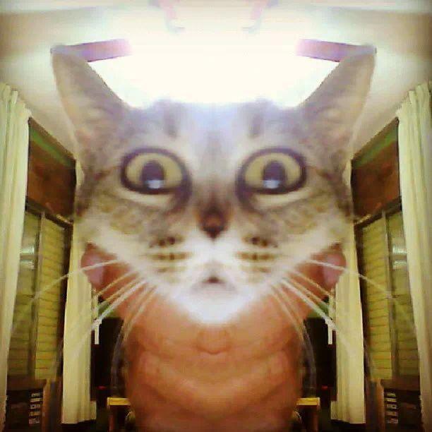 #alien #cat
