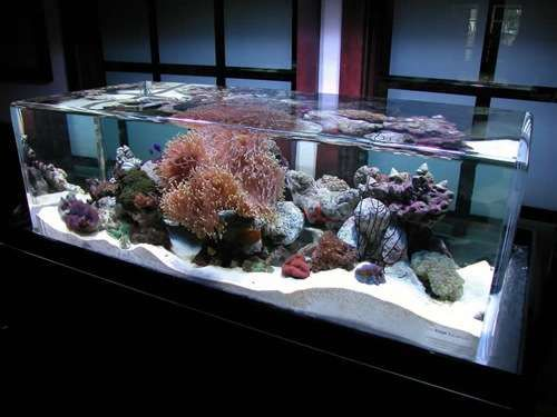 32 Magnificently Modern Aquariums - From Drink Chiller Fish Tanks to TV-Like Fish Tanks (TOPLIST)