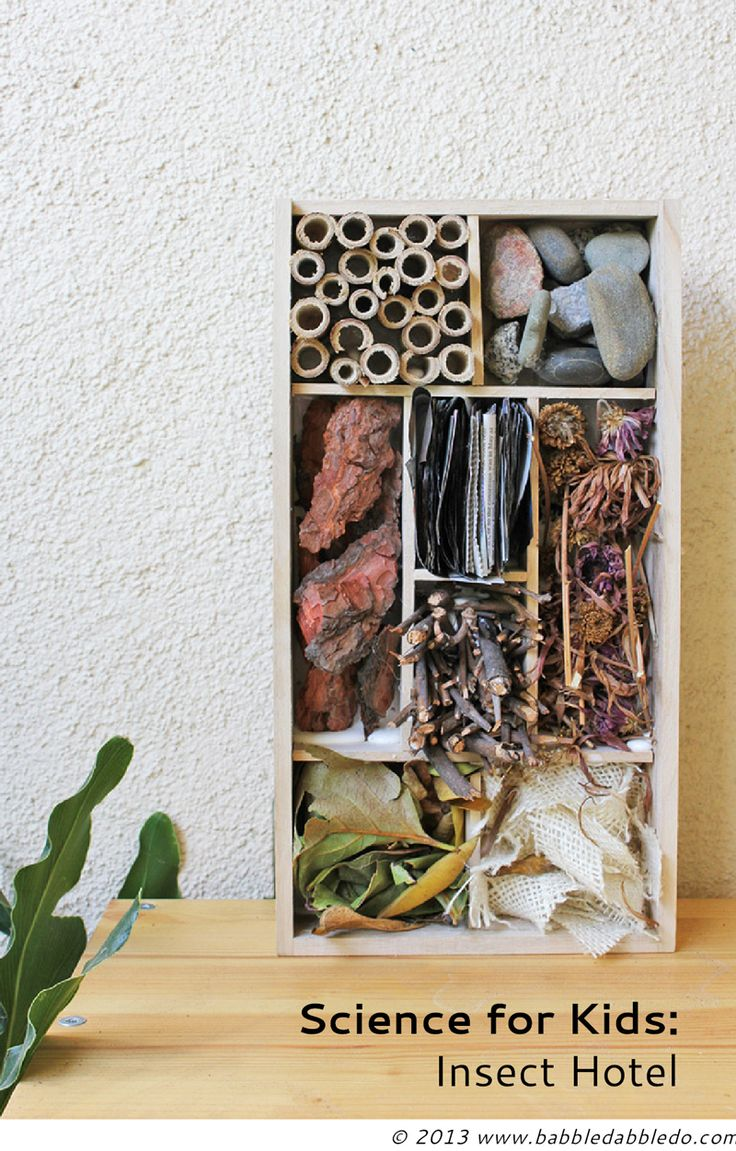 Science for Kids: Make an Insect Hotel for your garden!