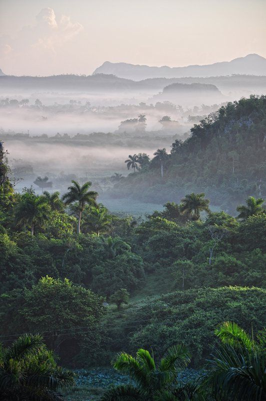 Early-morning fog hangs in the Valle de Viñales, Cuba, clinging to the jungled peaks that climb sharply from the world-famous tobacco plots.