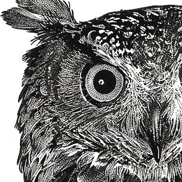 237 best images about Art ~ Pen and Ink on Pinterest