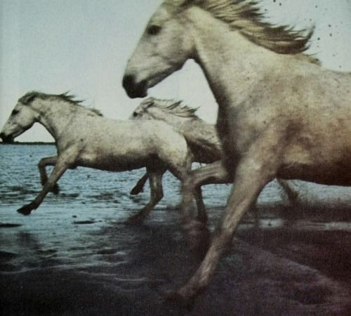 """In Chinese astrology, Horse year is considered a fortunate year that brings luck and good things. Magical Horse has supernatural powers, is heroic, strong, and can even fly! A white celestial cloud Horse is sacred to the Chinese Goddess Kwan Yin. Her white Horse flies through the heavens, bringing peace and blessings…"""