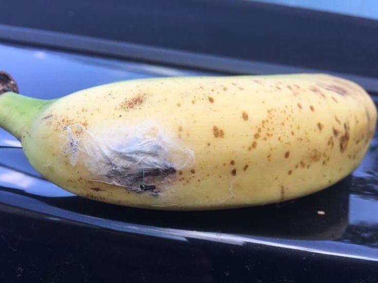 Un nid d'araignées dangereuses brésilienne s'est formé sur la peau d'une banane. Les oeufs grandissent dans le fruit. Elle se met à hurler de peur.