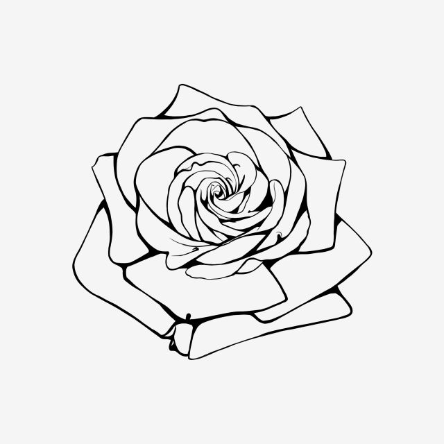 Rose Flower Handdraw Lineart Tree Rosa Blossom Black And White Black Drawing Outline Red Rose In 2020 Rose Drawing Red Rose Drawing Rose Outline