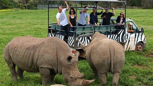 Open Vehicle Adventure, Werribee Zoo