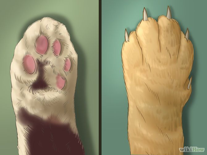 How to Trim Your Cat's Nails via wikiHow.com