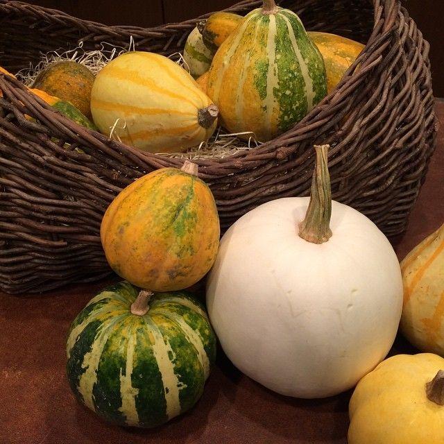 10月31日はハロウィンですね ハロウィンと言えばカボチャカボチャと言えばオレンジ色が定番でしたが今年は白いカボチャが入荷しています ハロウィンの飾りにいかがですか #flower #ラルブル #larbre #autumn  #ハロウィン #halloween #ashibe_lar