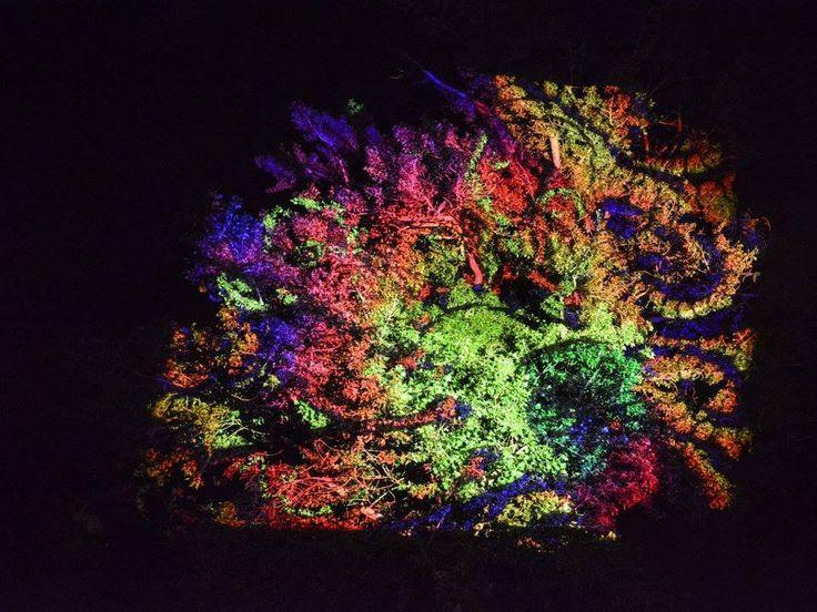 Fák, bokrok - fényfürdő - Night Projection fényfestés  IH Rendezvényközpont Családi Nap az Újszegedi Partfürdőn Night Projection fényfestés  További fotók: https://www.facebook.com/media/set/?set=a.850280614983618.1073741887.216863264992026&type=3  #családinap #Újszeged #NightProjection #fényfestés #raypainting #visuals