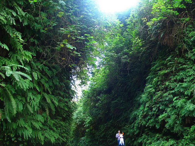 humboldt county Fern canyon | fern canyon 5 of Northern Californias Best Day Hikes