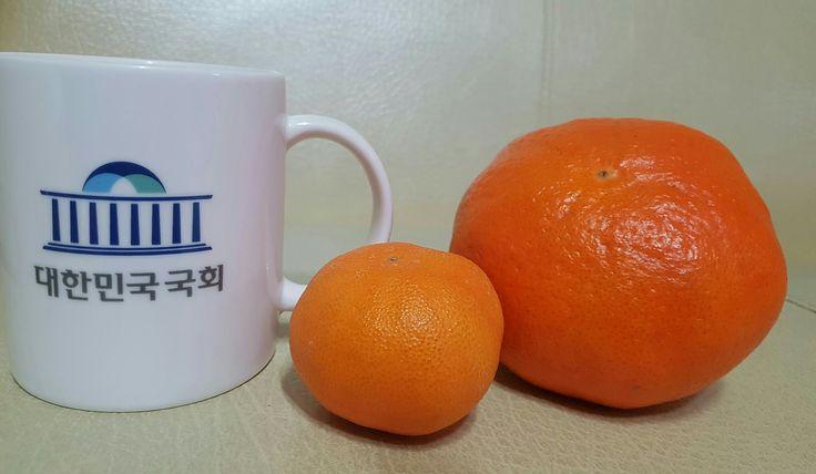 제주 감귤 레드향 #Jejudo #Mandarin #제주도 #서귀포 #Korea #대한민국 #한국  https://youtu.be/YC2fw4zap2A  https://youtu.be/YfjwuWYh09A