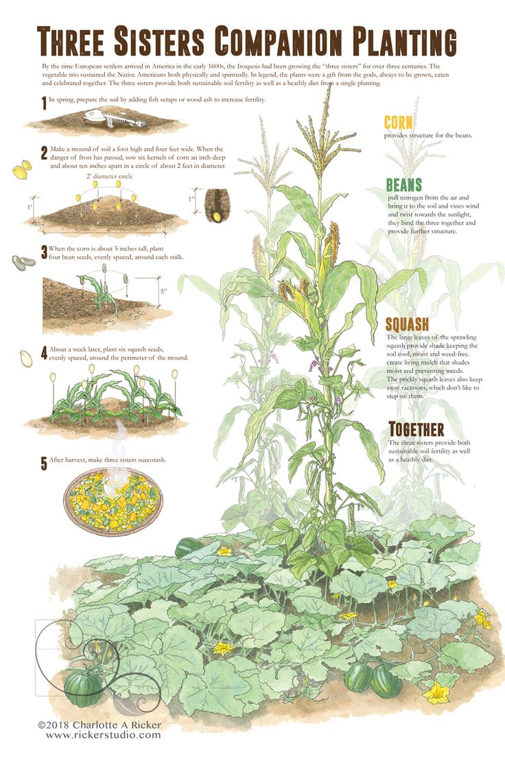 Vegetable Garden Companion Planting Layout
