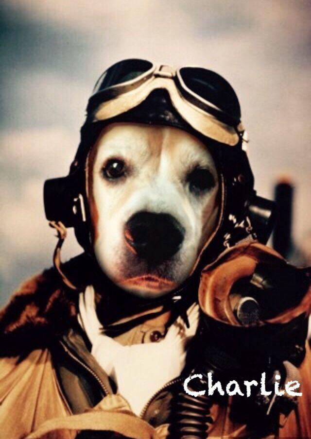 how to train a beagle to come